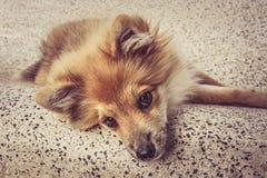Κατοικίδιο ζώο σκυλιών Στοκ εικόνες με δικαίωμα ελεύθερης χρήσης