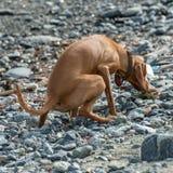 Κατουρήστε στην παραλία στοκ φωτογραφίες με δικαίωμα ελεύθερης χρήσης