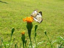 Κατοχή των πεταλούδων μεσημεριανού γεύματος στοκ εικόνα με δικαίωμα ελεύθερης χρήσης