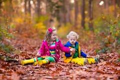 Κατσίκια που παίζουν στο πάρκο φθινοπώρου στοκ εικόνα