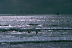 κατσίκια που παίζουν τα κύματα Στοκ Φωτογραφίες