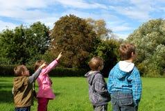 κατσίκια Στοκ εικόνα με δικαίωμα ελεύθερης χρήσης