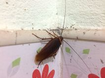 Κατσαρίδες στο λουτρό στοκ φωτογραφία