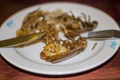Κατσαρίδα της Μαδαγασκάρης στο πιάτο Στοκ εικόνες με δικαίωμα ελεύθερης χρήσης