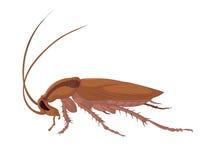 Κατσαρίδα Στοκ Εικόνες
