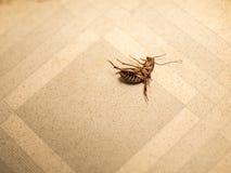 κατσαρίδα Στοκ φωτογραφίες με δικαίωμα ελεύθερης χρήσης