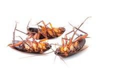 Κατσαρίδες νεκρές στοκ εικόνες με δικαίωμα ελεύθερης χρήσης