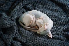 Κατσαρωμένος επάνω ύπνος γατών στοκ εικόνα