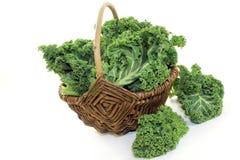 Κατσαρό λάχανο Στοκ Εικόνες