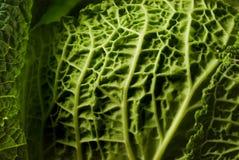 κατσαρό λάχανο Στοκ εικόνες με δικαίωμα ελεύθερης χρήσης