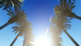 Κατώτατη άποψη αλεών φοινικών στις ακτίνες του φωτεινού ήλιου απόθεμα βίντεο