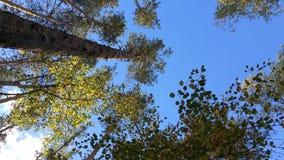 Κατώτατη άποψη στο θερινό δάσος απόθεμα βίντεο