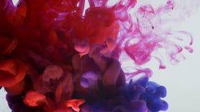 Κατώτατο σημείο κινηματογραφήσεων σε πρώτο πλάνο επάνω στο βλαστό κινήσεων του μελανιού watercolor ουράνιων τόξων που καταβρέχει  απόθεμα βίντεο