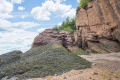 Κατώτατο σημείο των βράχων Hopewell με το φύκι στοκ εικόνες