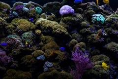 Κατώτατο σημείο χρώματος του ωκεανού στους τροπικούς κύκλους Στοκ φωτογραφία με δικαίωμα ελεύθερης χρήσης