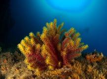 Κατώτατο σημείο ‹â€ ‹θάλασσας †με το βράχο με το κοράλλι στοκ φωτογραφίες με δικαίωμα ελεύθερης χρήσης