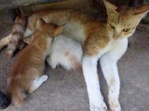 Κατώφλι και γάτες στοκ φωτογραφία με δικαίωμα ελεύθερης χρήσης