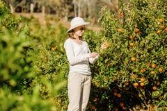 Καυκάσια μανταρίνια και πορτοκάλια συγκομιδής κοριτσιών μέσα Στοκ φωτογραφία με δικαίωμα ελεύθερης χρήσης