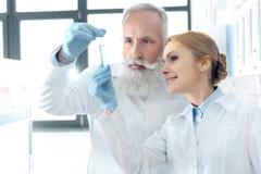 Καυκάσιοι φαρμακοποιοί στα άσπρα παλτά που εξετάζουν το σωλήνα στο χημικό εργαστήριο Στοκ Εικόνες