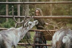 Καυκάσιος όμορφος ταΐζοντας τάρανδος γυναικών στο αγρόκτημα eco Στοκ φωτογραφία με δικαίωμα ελεύθερης χρήσης