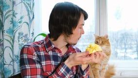 Καυκάσιο άτομο και κόκκινη γάτα που τρώνε το μάγκο μαζί στην κουζίνα στο σπίτι απόθεμα βίντεο