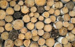 καυσόξυλο σημύδων Στοκ Φωτογραφία