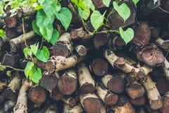 Καυσόξυλο σωρών που προετοιμάζεται για την εστία Στοκ Φωτογραφίες