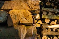 Καυσόξυλο μπριζολών που συσσωρεύεται τακτοποιημένα Στοκ Εικόνες