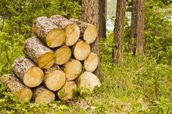 Καυσόξυλο σε ένα πάρκο Στοκ Εικόνα
