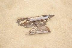 Καυσόξυλο στην παραλία άμμου Στοκ εικόνα με δικαίωμα ελεύθερης χρήσης