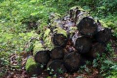 Καυσόξυλο στο δάσος Στοκ Εικόνες
