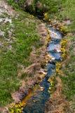 Καυτά ελατήρια - εθνικό πάρκο Yellowstone Στοκ φωτογραφία με δικαίωμα ελεύθερης χρήσης