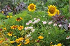 Καυτά λουλούδια ανοίξεων Chena στοκ φωτογραφία