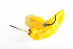 καυτά πιπέρια δύο Στοκ φωτογραφίες με δικαίωμα ελεύθερης χρήσης