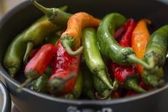 Καυτά πιπέρια τσίλι των διαφορετικών χρωμάτων Στοκ φωτογραφία με δικαίωμα ελεύθερης χρήσης