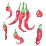 Καυτά πιπέρια Watercolor Στοκ Εικόνες