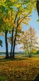 Καυτά χρώματα του δάσους στα βουνά στοκ φωτογραφία