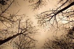 Καυτές και ξηρές σκιαγραφίες δασικών δέντρων Στοκ εικόνα με δικαίωμα ελεύθερης χρήσης