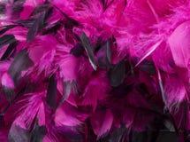 Καυτή ρόδινη λεπτομέρεια φτερών Στοκ Εικόνες