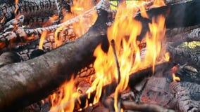 Καυτό καίγοντας ξύλο πυρκαγιάς με τον άνθρακα Καμμένος φλόγα από τον κλάδο