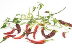 καυτό κόκκινο πιπεριών τσίλι Στοκ εικόνα με δικαίωμα ελεύθερης χρήσης