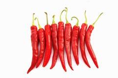 καυτό κόκκινο πιπεριών τσί&lamb στοκ εικόνα