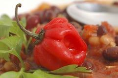καυτό κόκκινο πιπεριών στοκ φωτογραφία με δικαίωμα ελεύθερης χρήσης
