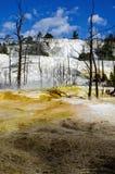 καυτό μαμμούθ εαρινό yellowstone Στοκ εικόνες με δικαίωμα ελεύθερης χρήσης