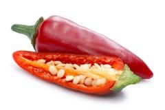 Καυτό πιπέρι Jalapeno (καψικό Annuum) Στοκ Φωτογραφία