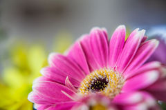 Καυτό ρόδινο λουλούδι Στοκ Εικόνες