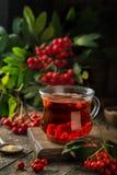 Καυτό rowanberry τσάι στο φλυτζάνι γυαλιού Στοκ Φωτογραφίες