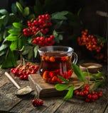 Καυτό rowanberry τσάι στο φλυτζάνι γυαλιού, Στοκ Φωτογραφία