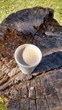 Καφές στο δέντρο Στοκ Εικόνα