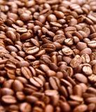 καφές φασολιών εθισμού Στοκ Εικόνες